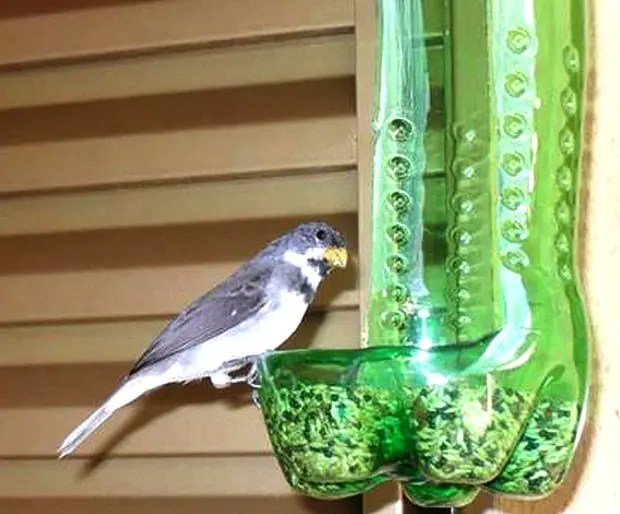 wpid-bird-feed.jpg