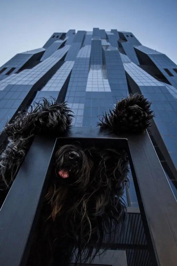 Perro-edificio