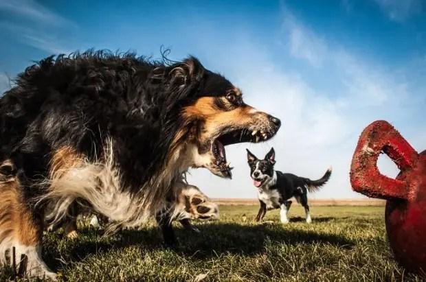 Perro-feroz