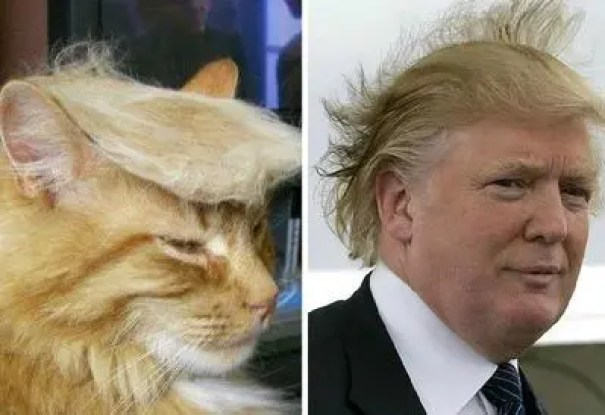 Trumpcat7