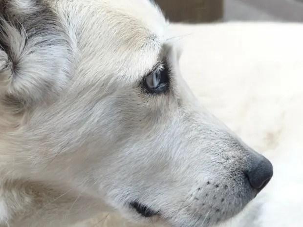 dog-186222_1280