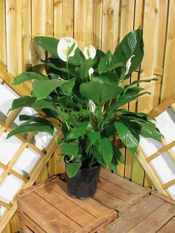 plantas-que-purifican-1