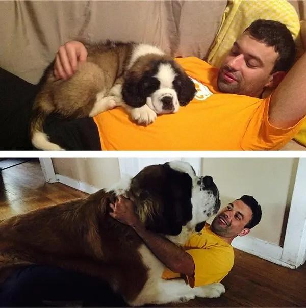 perros-grande-cree-cachorros-15
