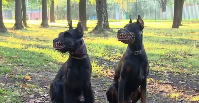 perro-bosal6