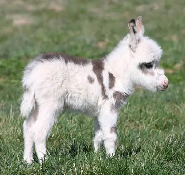 adorables animales bebe 11