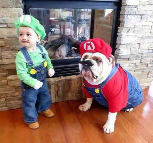 disfraces-halloween-ninos-mascotas8