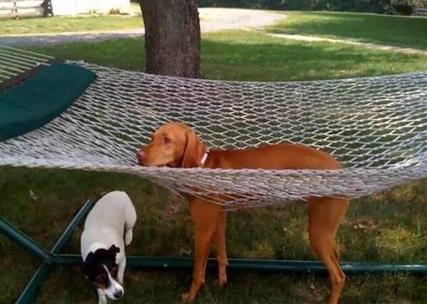 fails de perros 4