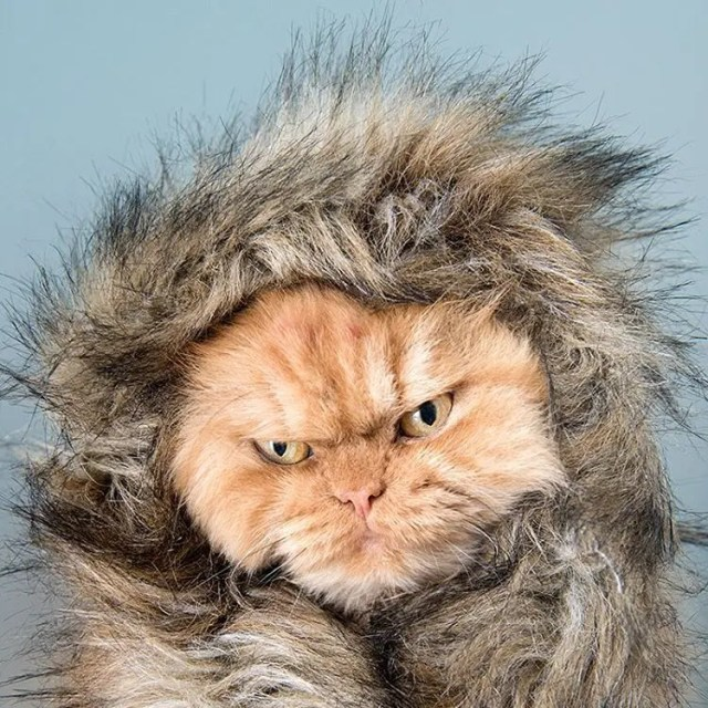 garfi-gatito-malhumorado-31