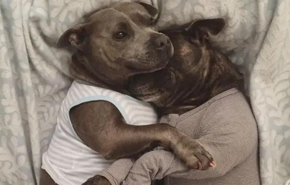 hermanos pitbull 1