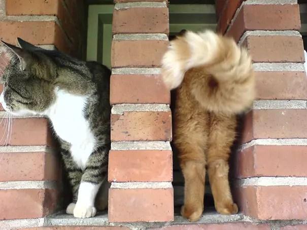 momento preciso gatos 10
