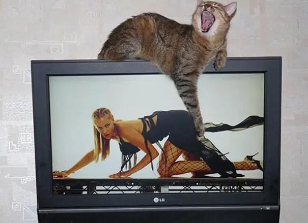 momento preciso gatos 19