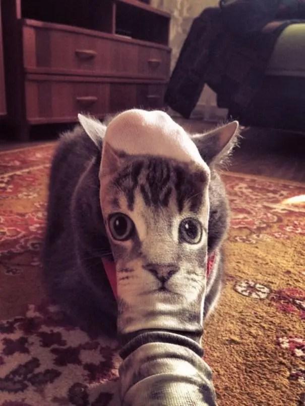 momento preciso gatos 21