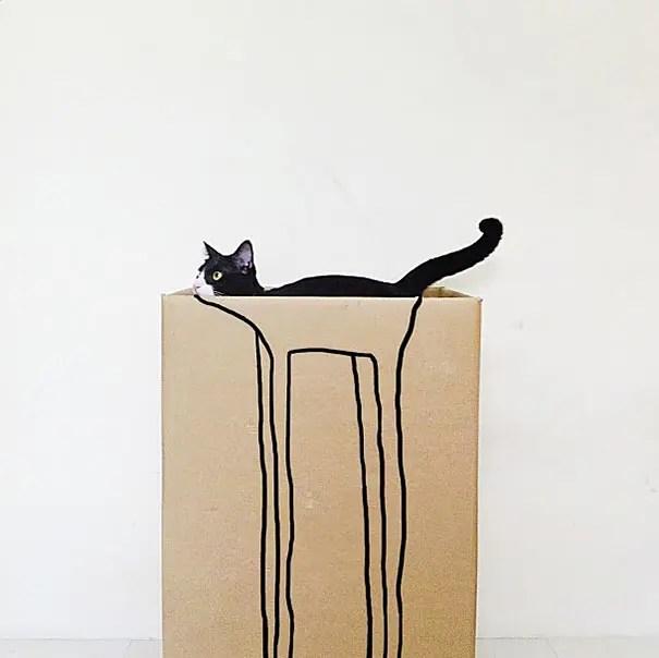 momento preciso gatos 22
