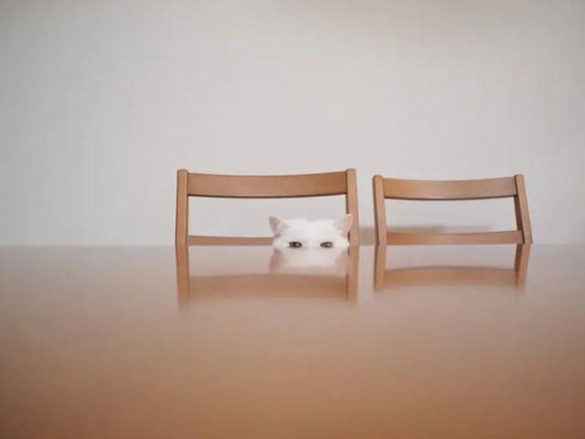 gato flojo 4