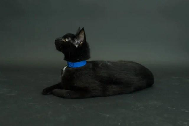 gatos negros adopcion 5