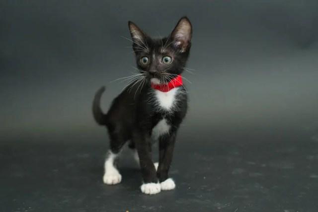 gatos negros adopcion 9
