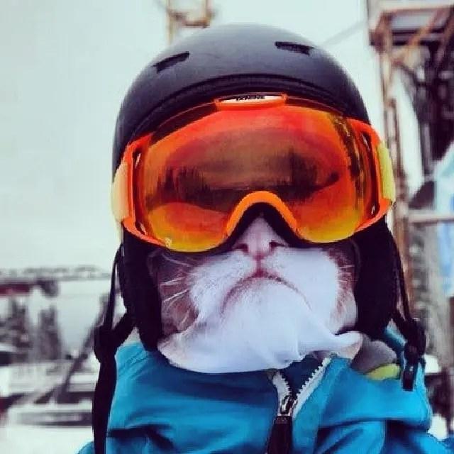 mascaras ski animales 2
