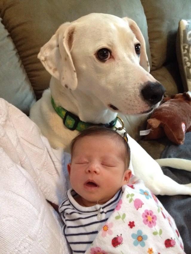 perritos-con-bebes-12
