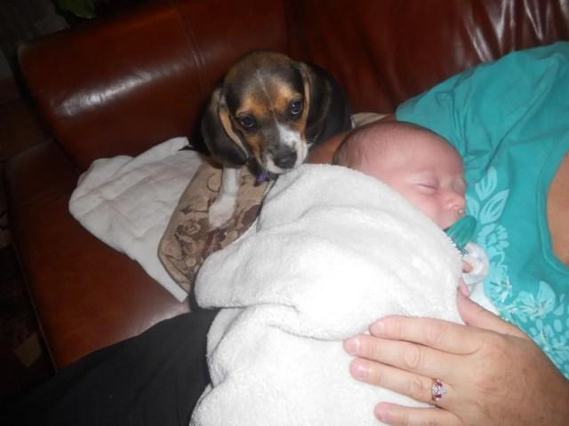 perritos-con-bebes-13