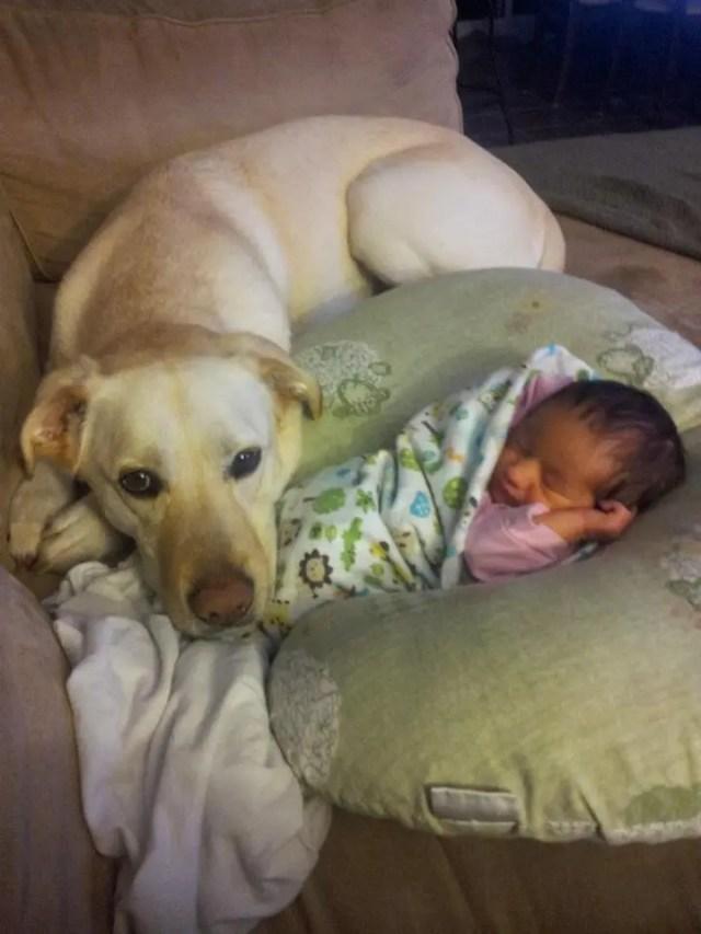 perritos-con-bebes-16