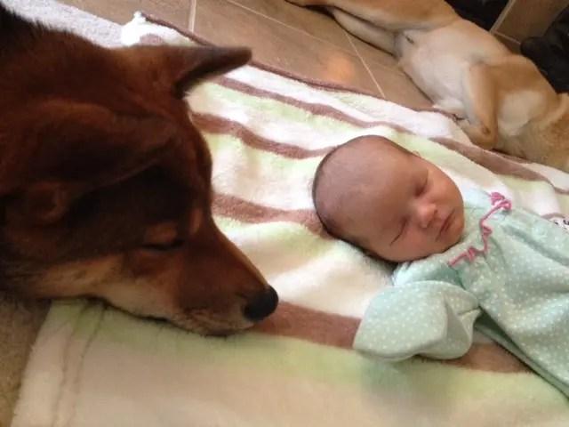 perritos-con-bebes-6