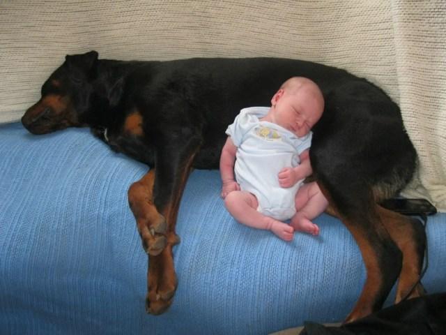 perritos-con-bebes-7