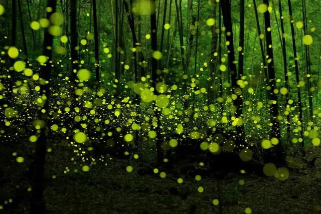 bellos bosques 10