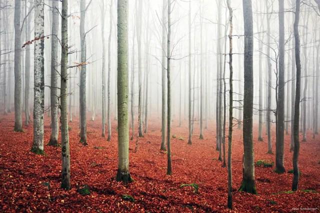 bellos bosques 18
