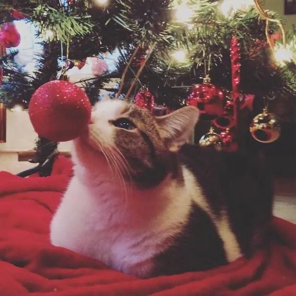 gatos-decorando-arbol-de-navidad15