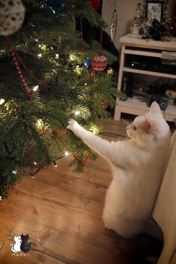 gatos-decorando-arbol-de-navidad16