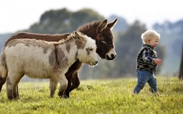 13-razones-para-tener-un-burro-bebe13