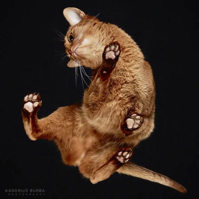 bajo gatos 5