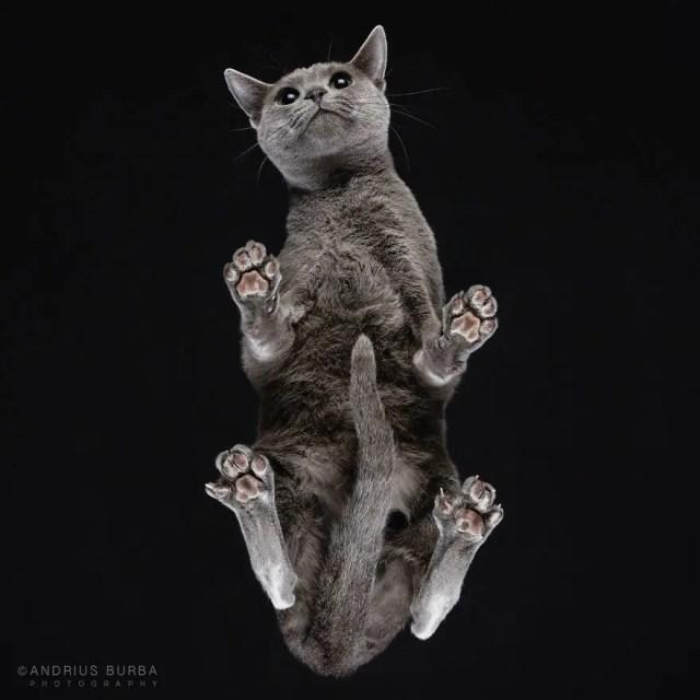 bajo gatos 8