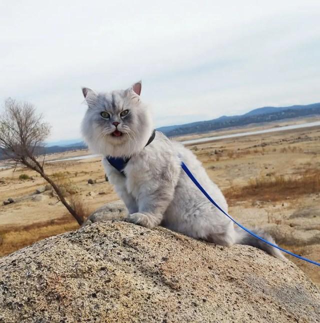 gandalf el gato 2