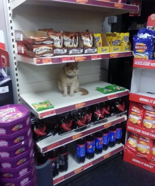 gato-dueno-supermercado1