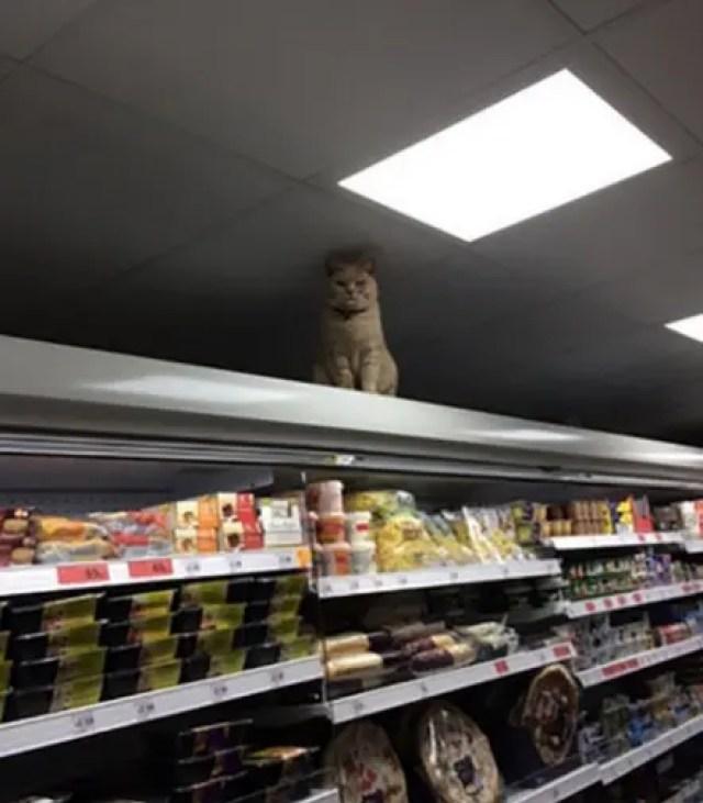 gato-dueno-supermercado3