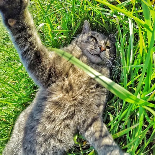 gato selfie 8