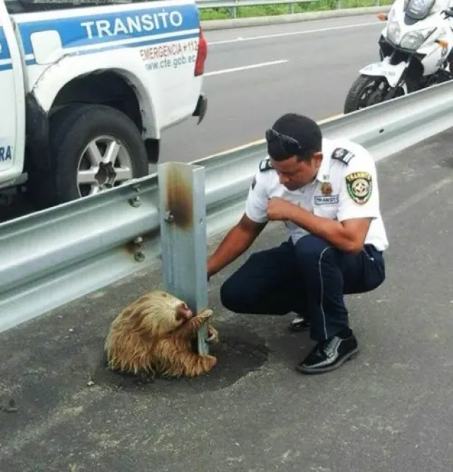 pereza-carretera-policia4 - copia