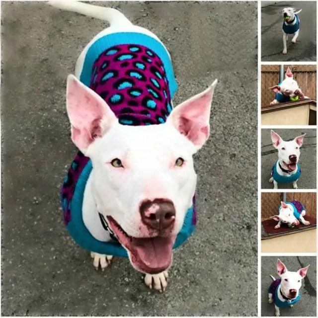perro-refugio-sordo3