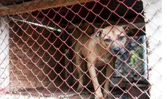 23 perros peleas rescatados 3