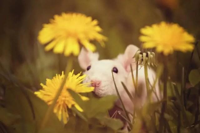 animales-oliendo-flores-26