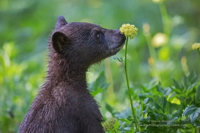 animales-oliendo-flores-27