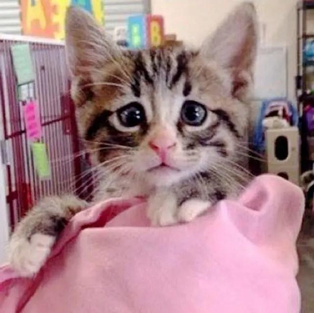 gatito bum 2