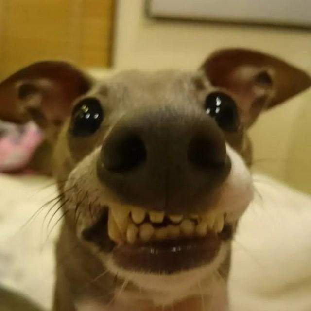 perros graciosos 13