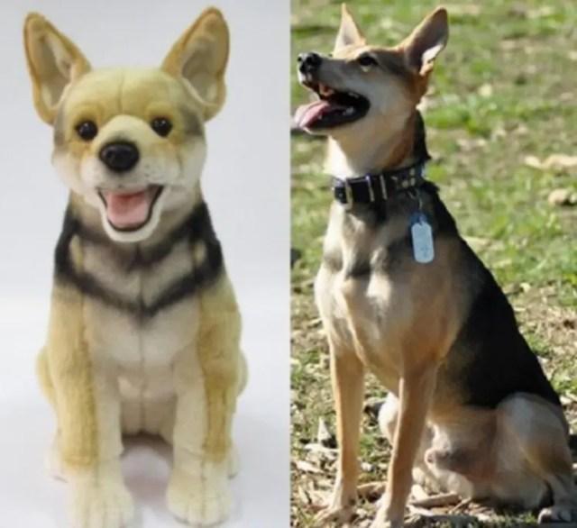 perritos-clonados-en-peluche-1
