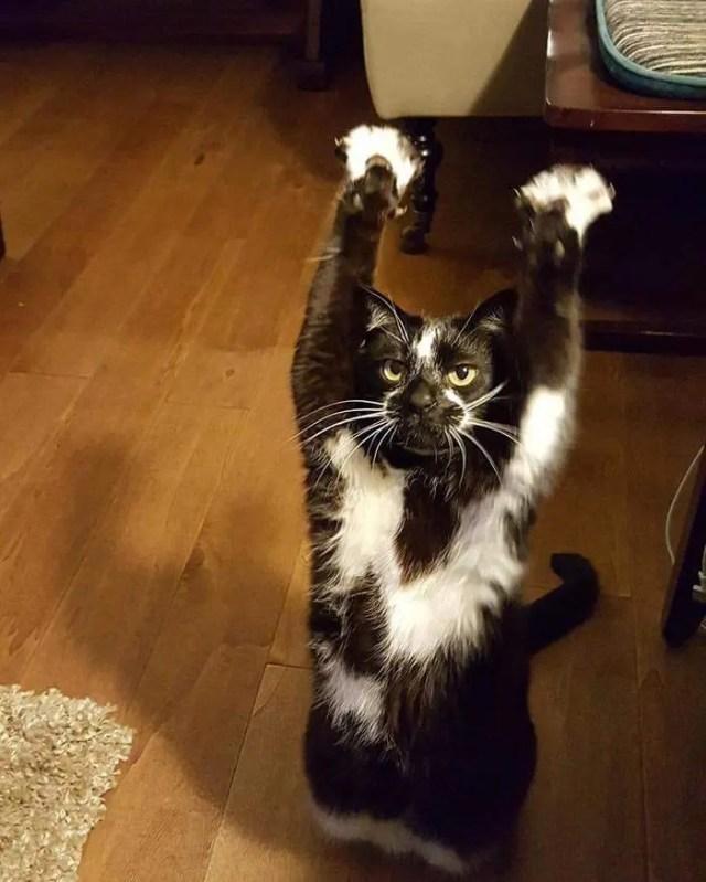 gato_brazos_en_alto6