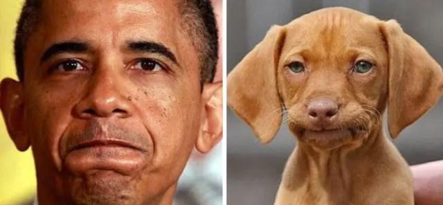 humanos-perros-1