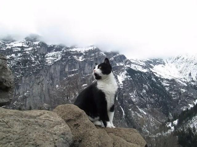 gato-guia-hombre-suiza-04