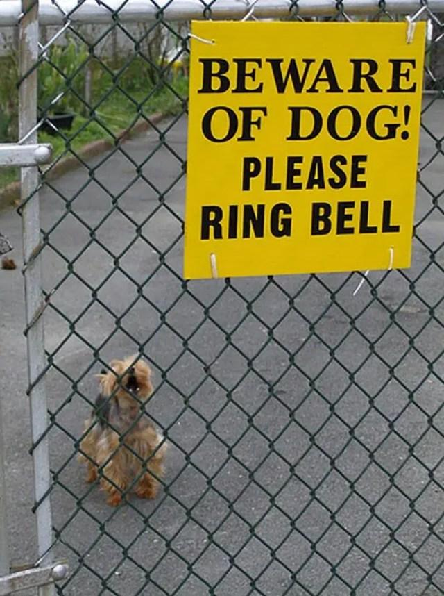 adorables-perros-peligrosos-22