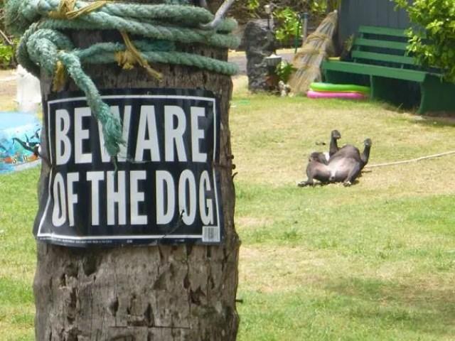 adorables-perros-peligrosos-24